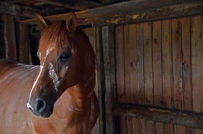 Abri cheval canicule chaleur